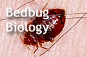 Text 'Bed Bug Biology,' with bed bug in background.